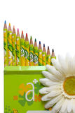 Pencils and white daisy flower. White daisy flower in front of box of decorated colored pencils with sharpened points on a white background Stock Photos