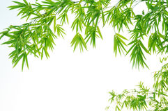Pendant bamboo foliage Stock Photography