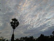 Pendant l'après-midi de Songkhla, la Thaïlande Le nuage étrange apparaissent palmier à sucre proche Images libres de droits