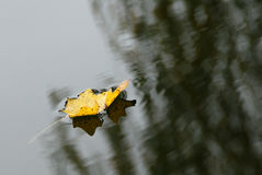 Pendant l'automne Photo stock