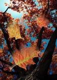 Pendant l'automne A Photo libre de droits