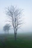 Pendant le matin avec la brume images libres de droits