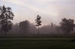 Pendant le matin avec la brume Photographie stock