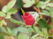 Pendant le matin, un petit s'est levé regardant la première fleur images stock