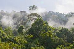 Matin au dessus d'une forêt tropicale de nuage Photos stock