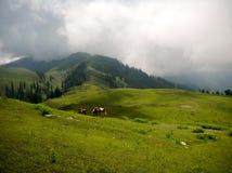 Montagnes et cheval Images libres de droits