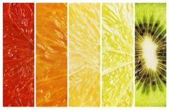 Pendenza da rosso alla raccolta della banda dell'agrume della frutta di colore verde Fotografie Stock Libere da Diritti
