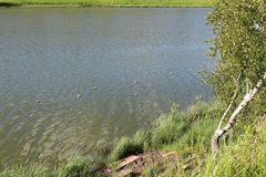 Pendiente al lago, a un pequeño abedul y a una red de pesca Imagenes de archivo