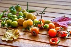 Pendiente del tomate en otoño Fotografía de archivo