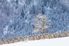 Pendii boscosi delle montagne di Caucaso in sole della nuvola Immagini Stock
