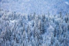 Pendii boscosi delle montagne di Caucaso in sole della nuvola Fotografia Stock Libera da Diritti