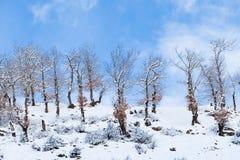 Pendii boscosi delle montagne di Caucaso in sole della nuvola Fotografia Stock