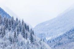 Pendii boscosi delle montagne di Caucaso in sole della nuvola Fotografie Stock