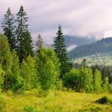 Pendii delle montagne, delle conifere e delle nuvole nel cielo di sera immagini stock