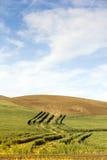 Pendii di collina e grano arati Immagini Stock Libere da Diritti