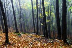 Pendii di collina rocciosi, i bei alberi di autunno. Immagine Stock
