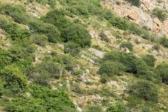 Pendii rocciosi nelle montagne Fotografia Stock Libera da Diritti