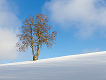 Pendio bianco del singolo albero contro un cielo blu di inverno Fotografie Stock