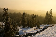 Pendio con gli alberi, vista di Snowy di tramonto Immagine Stock