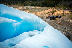 Pendio del ghiacciaio e della riva con la foresta Shevelev Fotografie Stock