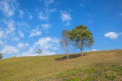 Pendio della collina accanto ad area di campeggio di Doi Samer Dao nella provincia di Nan, Tailandia Immagine Stock