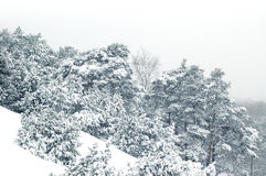 Pendio dello Snowy Fotografia Stock