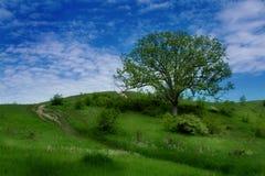 Hillside fotografia stock