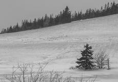 Pendio di collina brullo di inverno Fotografie Stock Libere da Diritti