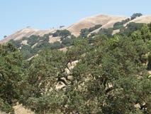 Pendio di collina della California Immagine Stock