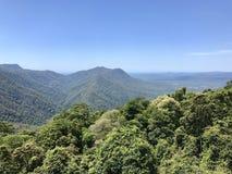 Pendio di collina della foresta, montagna di Dorrigo, Australia Fotografie Stock Libere da Diritti