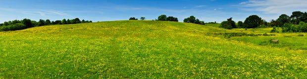 Pendio di collina di fioritura Fotografia Stock