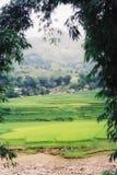 Pendio di collina nel Vietnam immagini stock