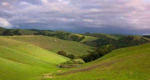 Pendio di collina pastorale con il bestiame in primavera Fotografia Stock Libera da Diritti