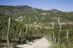 Pendio di collina in Piemonte immagini stock libere da diritti
