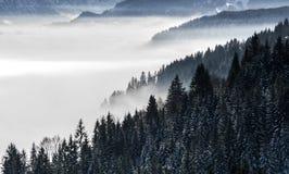 Pendio di montagna boscoso in nebbia di menzogne bassa della valle con le siluette delle conifere sempreverdi protette da nevoso  Immagini Stock Libere da Diritti