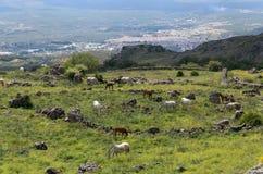 Pendio di montagna con il cavallo nel recinto per bestiame Fotografie Stock