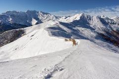 Pendio di montagna con neve fresca Fotografie Stock