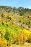 pendio di montagna delle foreste immagine stock libera da diritti