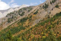 pendio di montagna delle foreste immagini stock libere da diritti