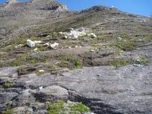 Pendio di montagna erboso nelle alpi Immagini Stock