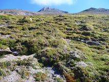 Pendio di montagna erboso nelle alpi Immagine Stock