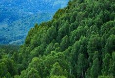Pendio di montagna legnoso con la valle di una montagna hazed Immagini Stock