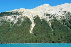 Pendio e foresta di montagna fotografia stock libera da diritti