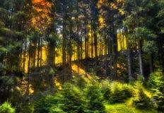 Pendio nella foresta Fotografie Stock