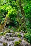 Pendio roccioso con gli alberi e muschio in foresta del sud Fotografia Stock