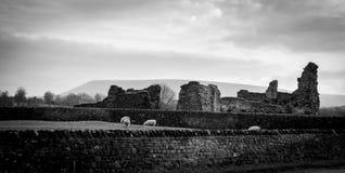 Pendle小山看法与废墟和绵羊的 黑色白色 库存图片