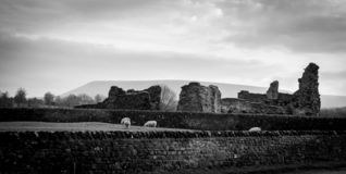 A view of Pendle Hill with a ruin and sheep. black and white stock image