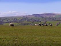 Pendle kulle i Lancashire England Arkivbild