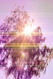 Pendula alba de Betula del abedul que llora a la izquierda Foto de archivo libre de regalías