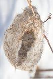 Penduline tit ( Remiz pendulinus ) nest Stock Images